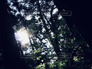 木漏れ日の写真・画像素材[780383]