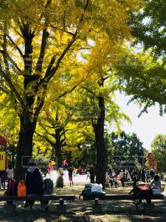 公園のイチョウ - No.847215