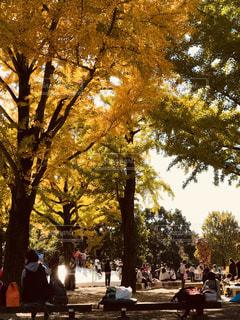 秋の公園 - No.878836