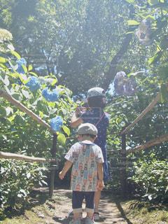 雨,屋外,散歩,子供,紫陽花,梅雨,アジサイ