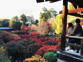 通天橋からの紅葉の写真・画像素材[863392]
