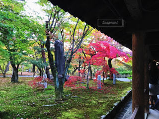 苔むす庭に、紅葉。の写真・画像素材[863396]