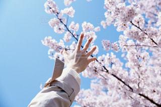 空,花,春,桜,手,腕,届け,ジェスチャー