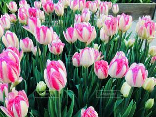 近くの花のアップの写真・画像素材[842472]
