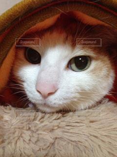 近くに帽子をかぶった猫のアップの写真・画像素材[858397]
