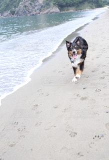 波打ち際を走る犬の写真・画像素材[2159260]