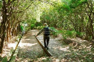 登山道を手を広げて歩いてる人の写真・画像素材[781444]