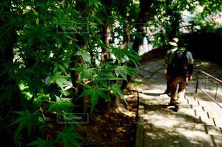 青紅葉越しの登山者の写真・画像素材[781611]