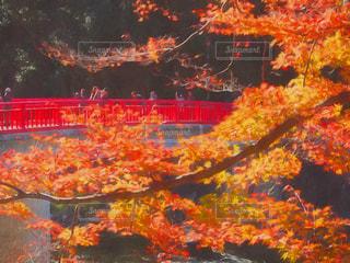香嵐渓の紅葉 - No.795475