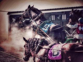 力強いばん馬の競馬の写真・画像素材[795627]