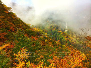 自然,秋,紅葉,屋外,雲,観光,樹木,旅行,明智平,多色,PassMe,明智平ロープウェイ