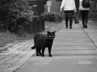 猫村の黒猫の写真・画像素材[801443]