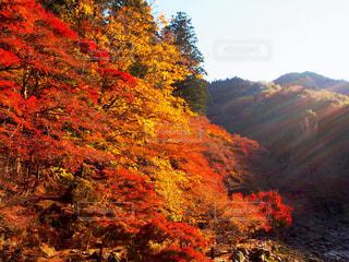 香嵐渓の紅葉 - No.810010