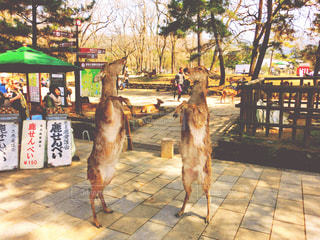 2頭の鹿 - No.810041