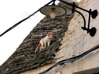 アルベロベッロの猫の写真・画像素材[810549]