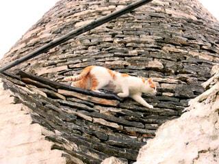 アルベロベッロの猫の写真・画像素材[810551]