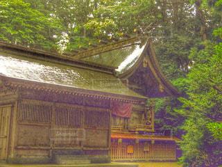 雨の高千穂神社の写真・画像素材[813510]