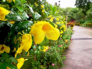 雨に咲く花 - No.813542