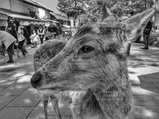 奈良公園の写真・画像素材[846599]