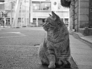 柴又の野良猫 - No.851683