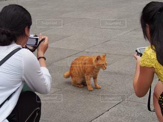 女性,猫,カメラ,屋外,後ろ姿,撮影,人物,背中,人,後姿,写真,台湾,路上,茶トラ,猫村,猴硐,ホウトン