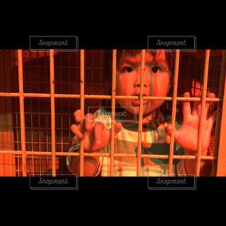 檻の中の写真・画像素材[1439692]