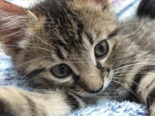 猫の写真・画像素材[36996]