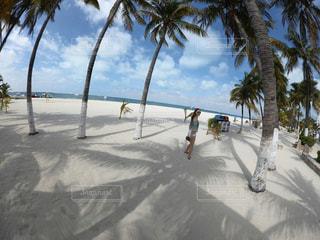ヤシの木とビーチ - No.783306