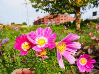 紫の花の束の写真・画像素材[847198]