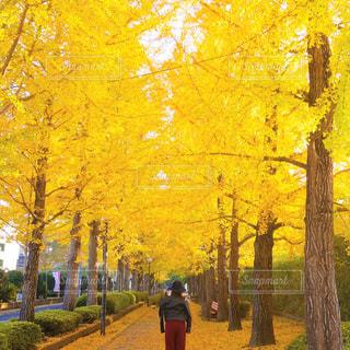 近くの木のアップの写真・画像素材[856120]