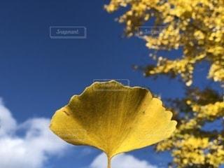 黄色の花の写真・画像素材[868768]