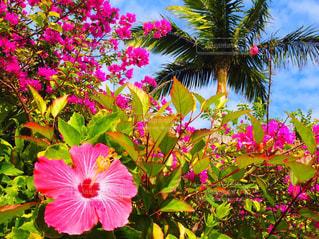 花,沖縄,旅行