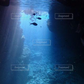 水の中を泳ぐ鳥の写真・画像素材[902270]