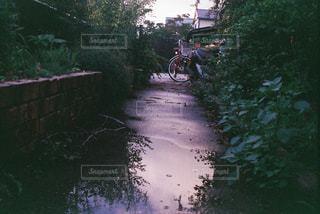 川の側の木がパスの写真・画像素材[819071]