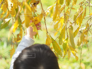 近くの木のアップの写真・画像素材[854509]