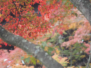 京都にての写真・画像素材[854528]