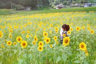 フィールド内の黄色の花の写真・画像素材[919617]