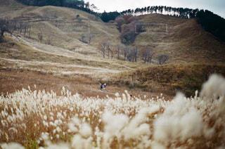 煙る山頂の雪の上を歩く羊の群れの写真・画像素材[1043976]