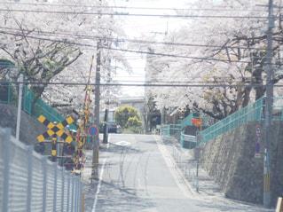 桜の写真・画像素材[1122009]