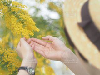 花,帽子,黄色,女の子,お花見,麦わら帽子,人,ミモザ,兵庫県,兵庫,カンカン帽,インスタ映え,円照寺