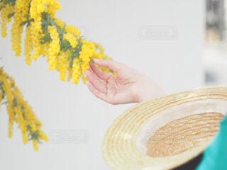 春,フラワー,帽子,黄色,女の子,お花見,麦わら帽子,人,ミモザ,兵庫県,兵庫,カンカン帽,インスタ映え,円照寺