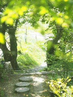 近くの木のアップの写真・画像素材[1178367]