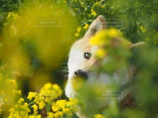 我が家の愛犬の写真・画像素材[1187403]