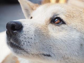 近くにカメラを見て犬のアップの写真・画像素材[1187405]
