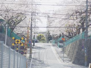 桜と踏切の写真・画像素材[1235105]