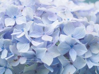 近くの花のアップの写真・画像素材[1235120]