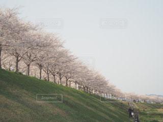 緑豊かな緑のフィールド上を歩く羊の群れの写真・画像素材[1253243]