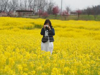 満開の菜の花との写真・画像素材[1261062]