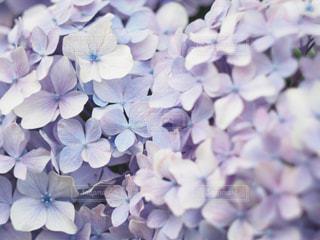 近くの花のアップの写真・画像素材[1388330]