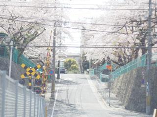 自然,花,春,桜,屋外,線路,花見,サクラ,お花見,兵庫県,さくら